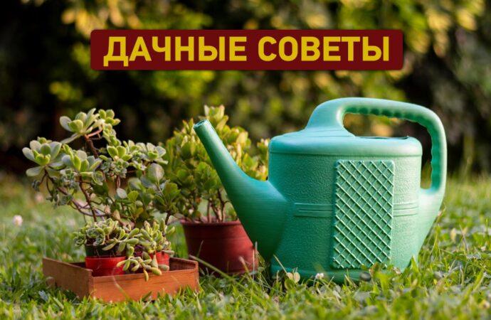 Дачные советы: лунный календарь работ в мае и советы для сада и огорода