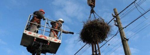 Одесские энергетики модернизируют гнезда аистов и устанавливают птицезащиту