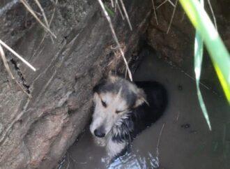Одесские спасатели вызволили собаку из ловушки (фото)
