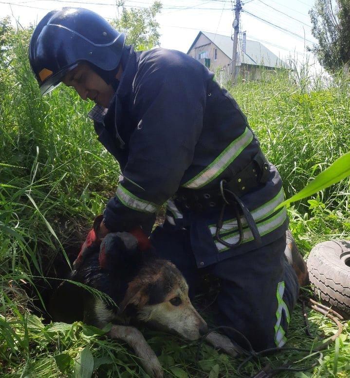 спасатель освободил собаку