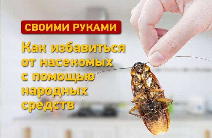Инструкция: как избавиться от мух и тараканов с помощью народных средств