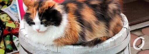 «Кому ремня?» и кот на бочке: одесские уличные завлекалочки в обновленных вариантах (фоторепортаж)