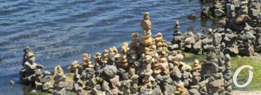 На одесском «собачьем» пляже взрастили сад камней (фото)