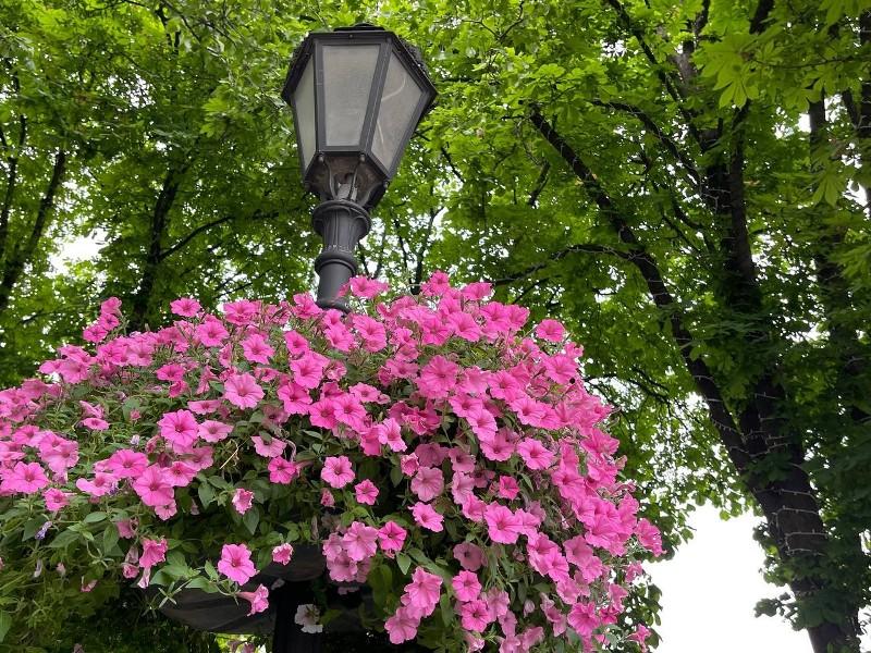 летние цветы2