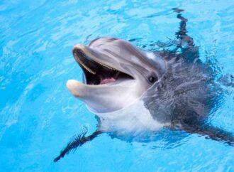 Дельфин укусил ребенка в Одессе (видео)