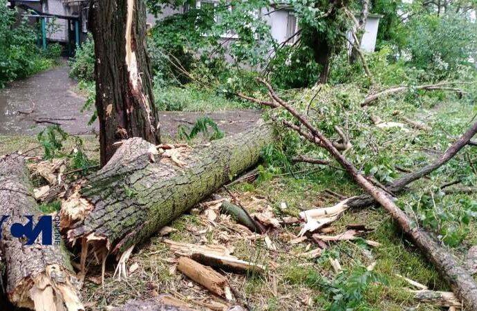 Разгул стихии по-одесски: деревопад, потоп, трамваи встали (фото, видео)