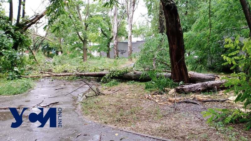 деревопад в Одессе2