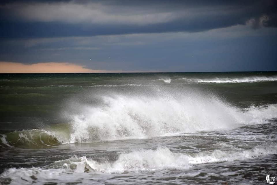 море зацвело
