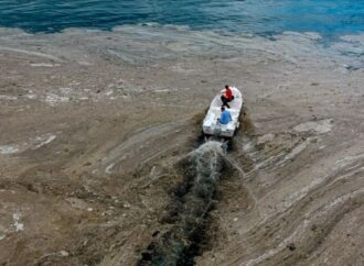 «Морские сопли» атаковали Турцию: чем они опасны и чего ждать у одесских берегов – мнение эколога