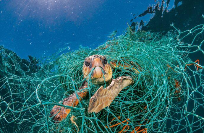 Этот день в истории: Всемирный день океанов
