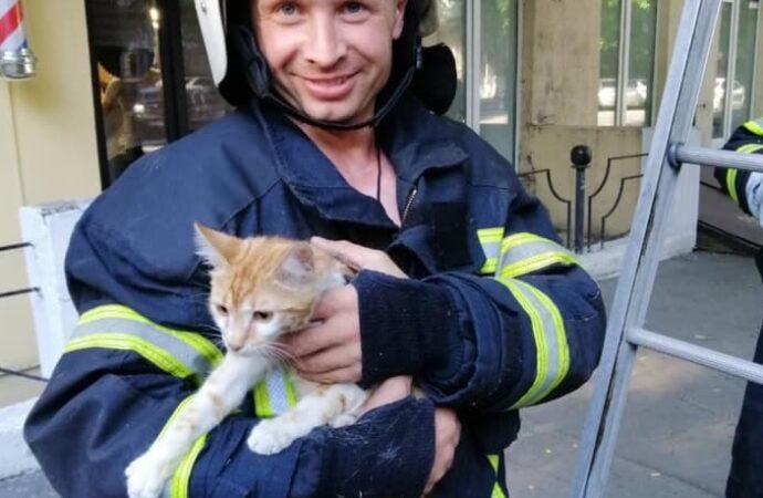 В Одессе кота сняли с дерева: испуганный котик и счастливый спасатель (фото и видео)