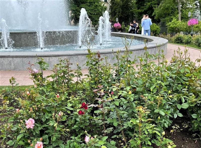 Розы, фонтан