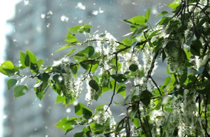 Прогноз погоды в Одессе на субботу, 5 июня