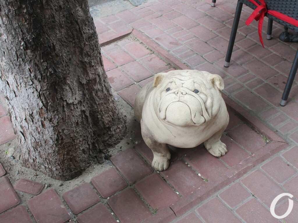 собаки в Одессе5