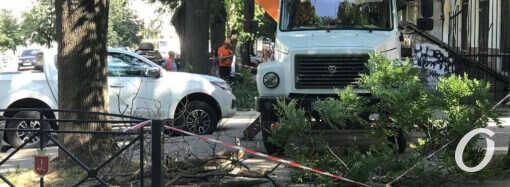 В центре Одессы трудятся пильщики деревьев (фото)