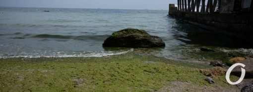 Температура морской воды в Одессе 25 июля: стоит ли купаться?