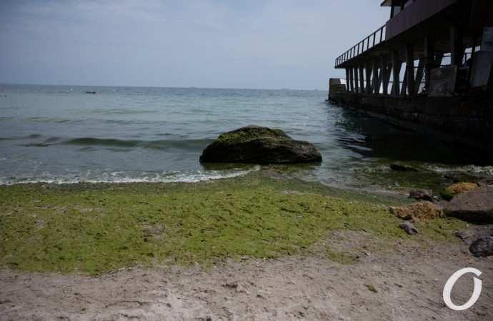 Специалисты не советуют купаться на 4-х курортах Одесчины – почему?
