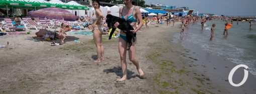 Температура морской воды в Одессе 30 июля: море теплое, но стоит ли купаться?