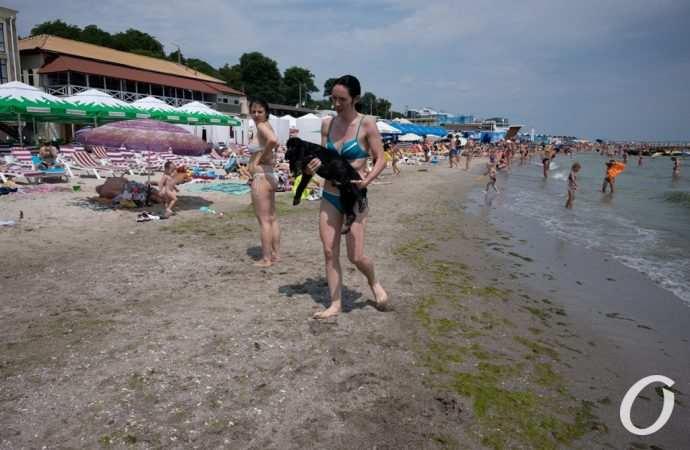 Температура морской воды в Одессе 5 августа: купаться можно
