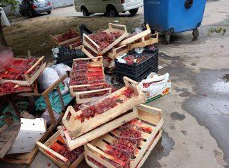 День прошел: как выглядит одесская улица после стихийных торговцев