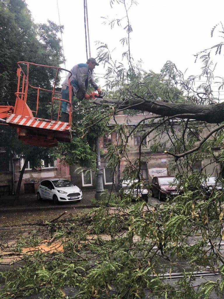 рабочий распиливает упавшее дерево