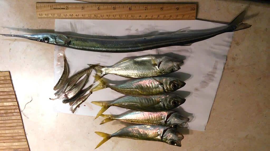 Черноморский улов