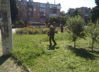 Одесситов просят оповещать о местах скопления амброзии