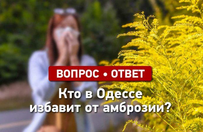 Вопрос – ответ: кто в Одессе избавит об амброзии?