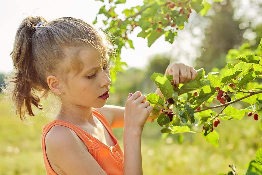 девочка ребенок шелковица