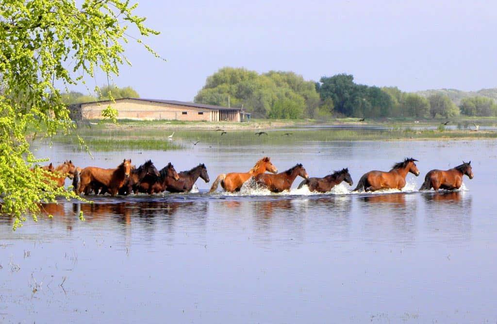 кони лошади река
