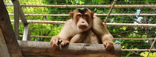 Одесситов зовут на веселый праздник в честь обезьян с коротким хвостиком