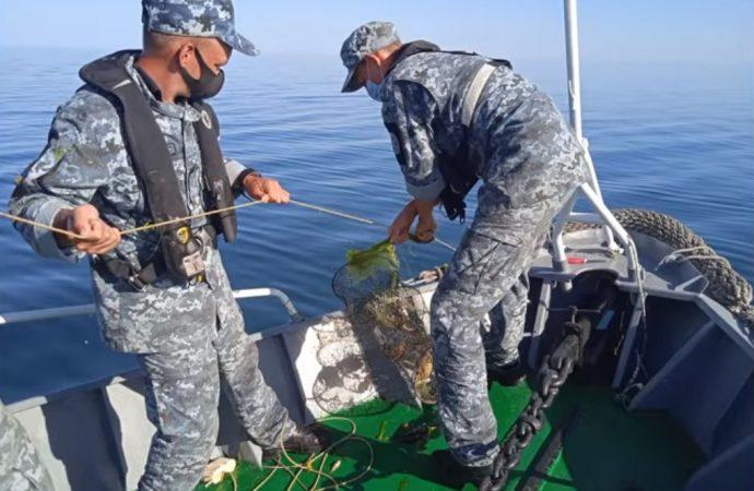 Одесские пограничники спасли в Черном море 1000 крабов (видео)