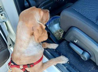 В порту Одессы собака обнаружила гору патронов: что еще находят пограничники? (видео)