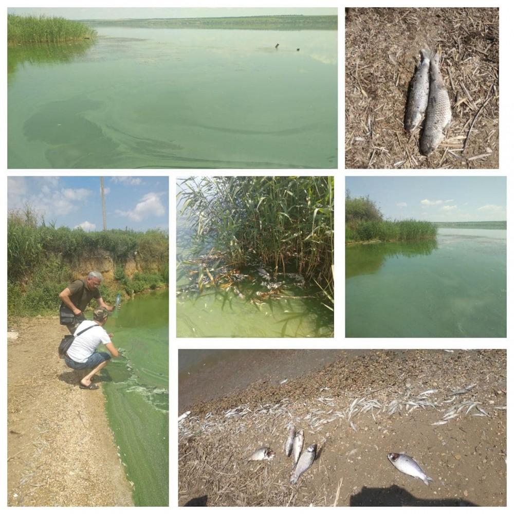 мор рыбы на Хаджибеевском лимане