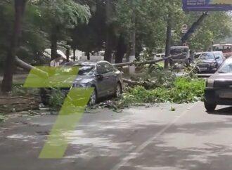На ул. Инглези в Одессе ветка упала на припаркованную «Шкоду»: образовалась пробка