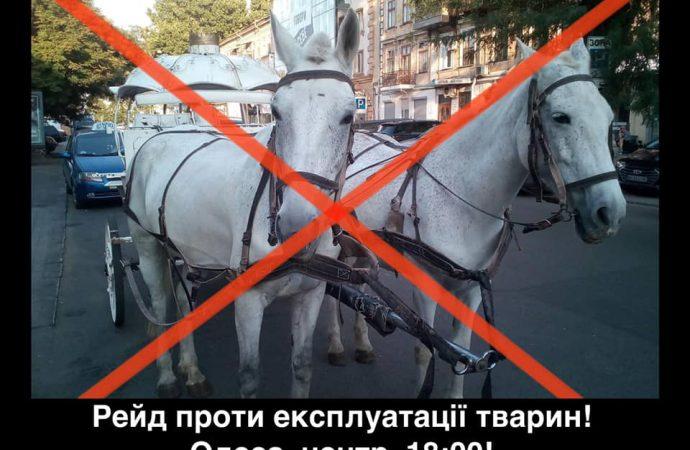 Одесситы заступились за лошадь: активисты грозятся разгромить все кареты для увеселения отдыхающих