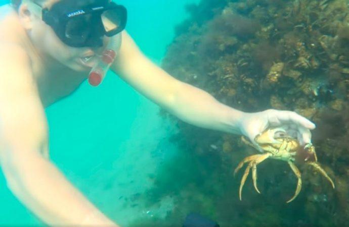 Одесский эколог показал завораживающее видео с морского дна (видео)