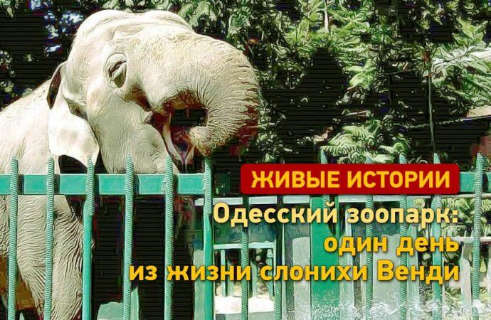 Живые истории Одессы: один день из жизни слонихи Венди