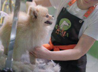 В Одессе на Маразлиевской начала работать «Собачья дача»