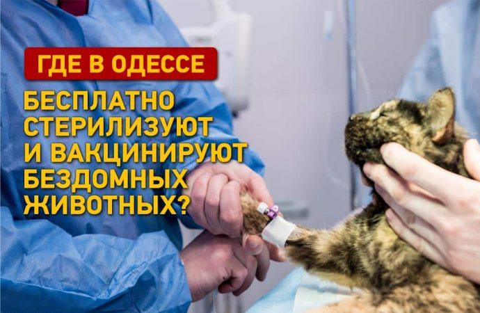 Где в Одессе бесплатно стерилизуют и вакцинируют бездомных животных?