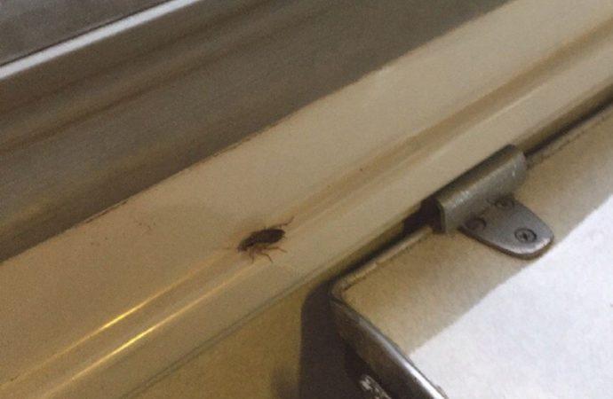 В поезде Одесса-Харьков тараканы атаковали пассажиров