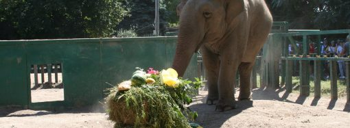 В Одесском зоопарке пройдут два детских праздника: сюрпризы для первоклассников и не только
