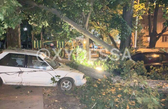 Застройка Молдаванки и дерево против авто: чем запомнился в Одессе последний сентябрьский день