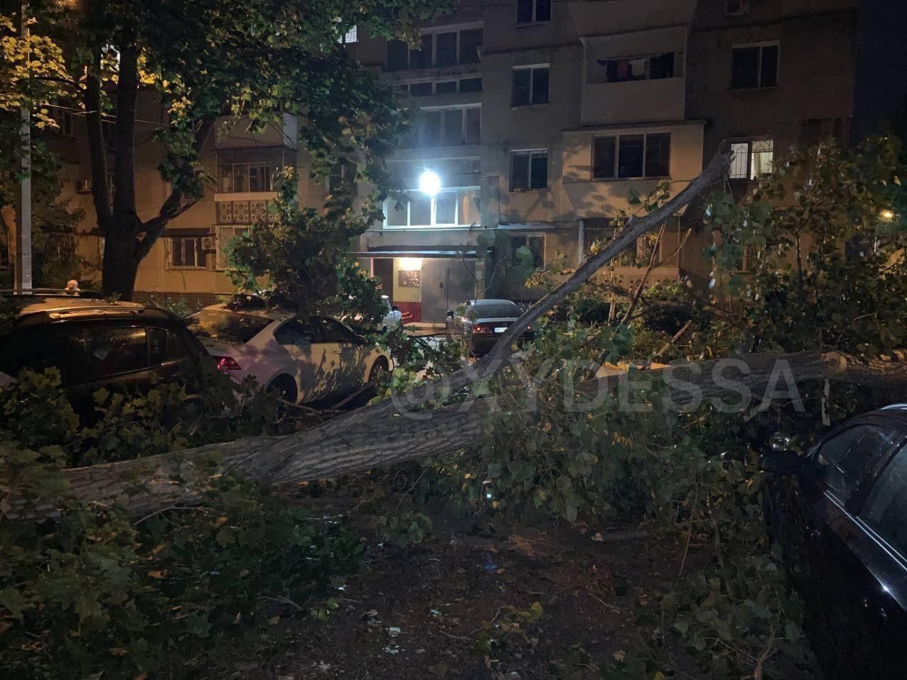 в Одессе дерево упала на авто