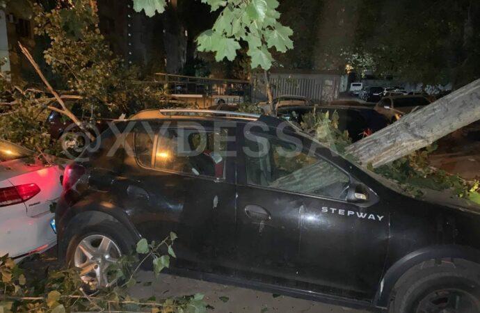 В Одессе дерево «прихлопнуло» 8 автомобилей