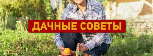 Дачные советы сентября: календарь работ, борьба с вредителями, заготовка компоста