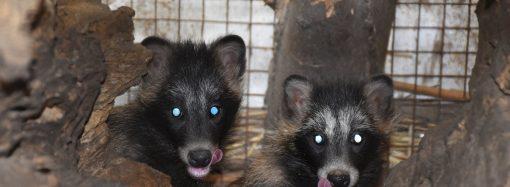Детенышам зверей в Одесском зоопарке нужны имена: предлагайте варианты