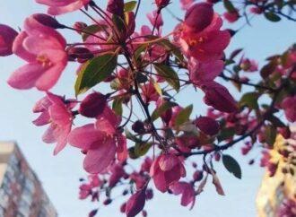 В Одессе хотят высадить яблоневую аллею в память о защитницах Украины