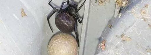 Житель Измаила нашел у себя во дворе опасную черную гостью (фото)