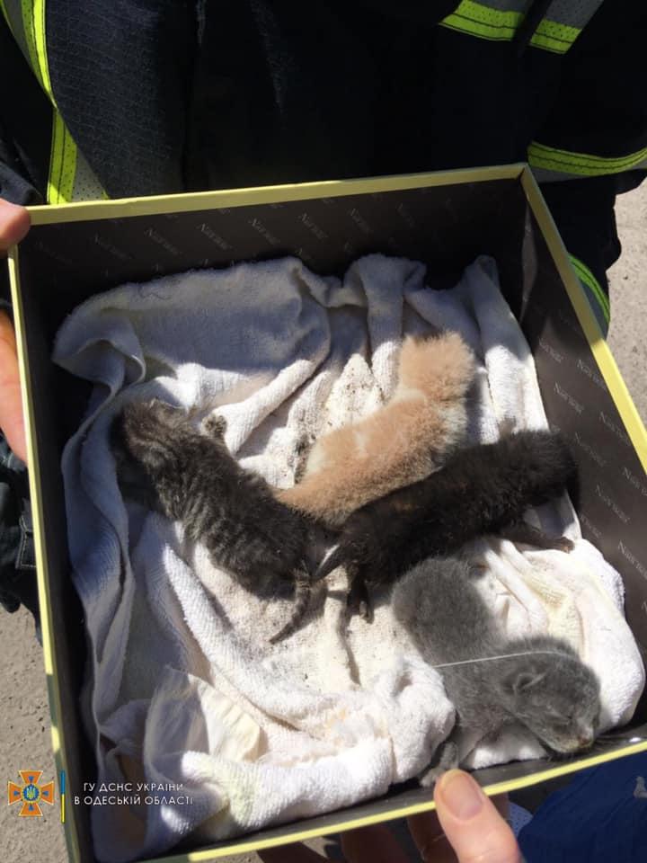 спасенные котята